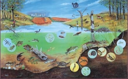 lake-ecosystem-1_438x0_scale